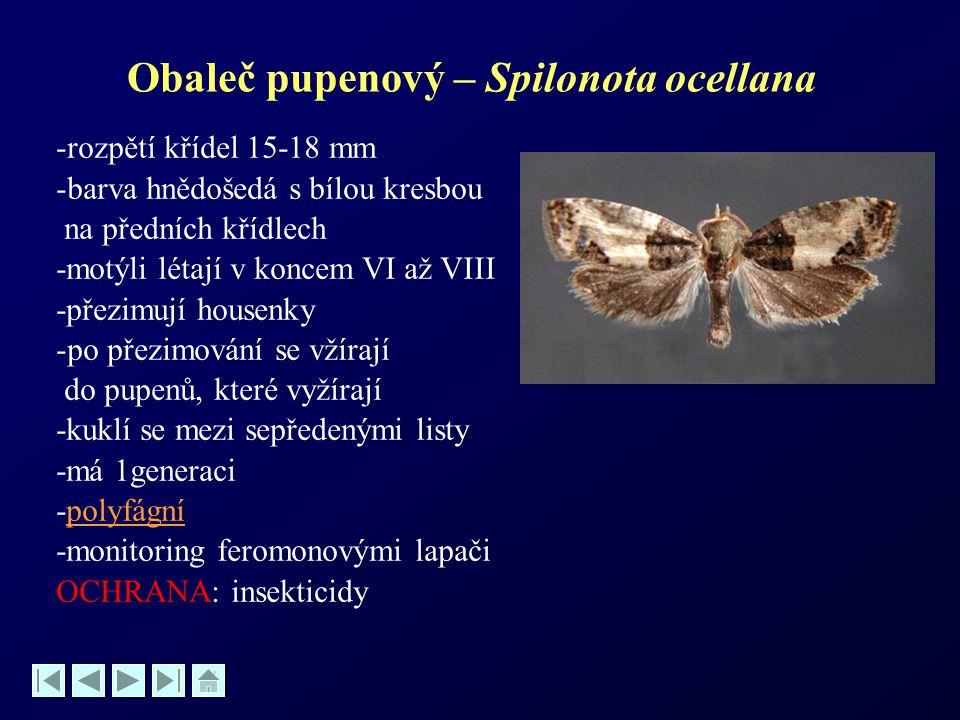Obaleč pupenový – Spilonota ocellana -rozpětí křídel 15-18 mm -barva hnědošedá s bílou kresbou na předních křídlech -motýli létají v koncem VI až VIII
