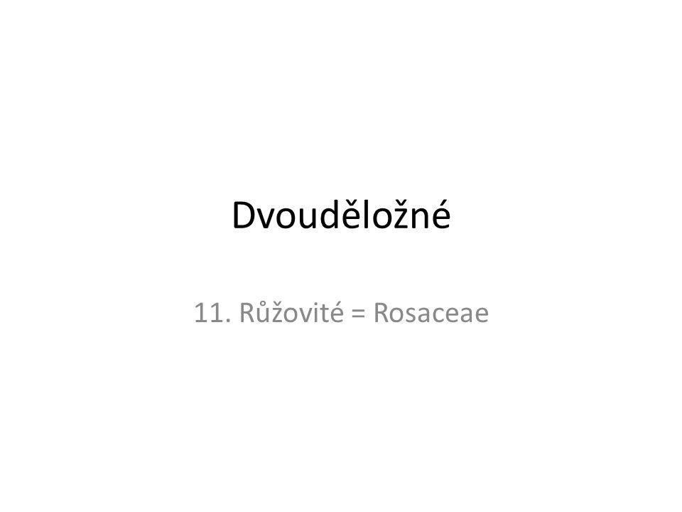 Dvouděložné 11. Růžovité = Rosaceae