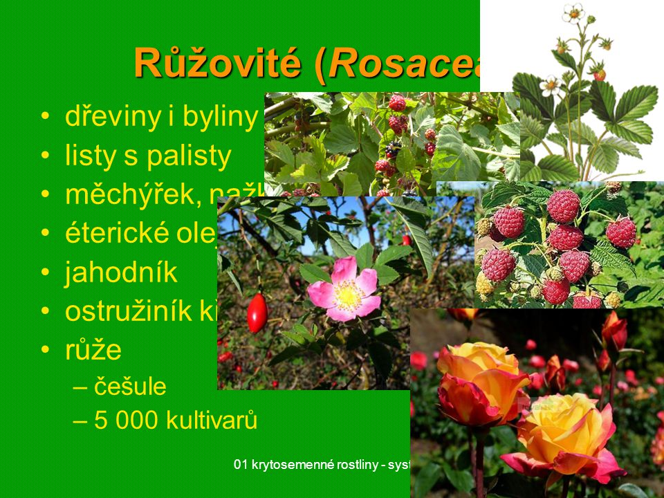 01 krytosemenné rostliny - systém1 Růžovité (Rosaceae) dřeviny i byliny listy s palisty měchýřek, nažka, peckovice, malvice éterické oleje jahodník os