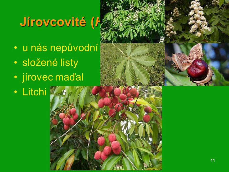 01 krytosemenné rostliny - systém11 Jírovcovité (Hippocastanaceae) u nás nepůvodní složené listy jírovec maďal Litchi