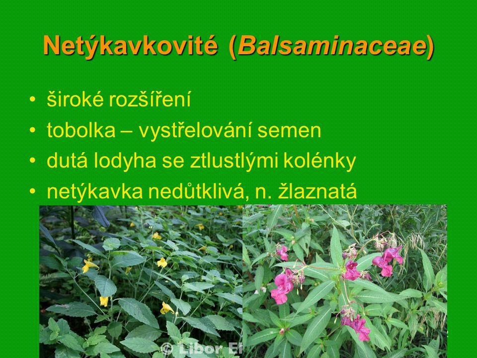 01 krytosemenné rostliny - systém12 Netýkavkovité (Balsaminaceae) široké rozšíření tobolka – vystřelování semen dutá lodyha se ztlustlými kolénky netý