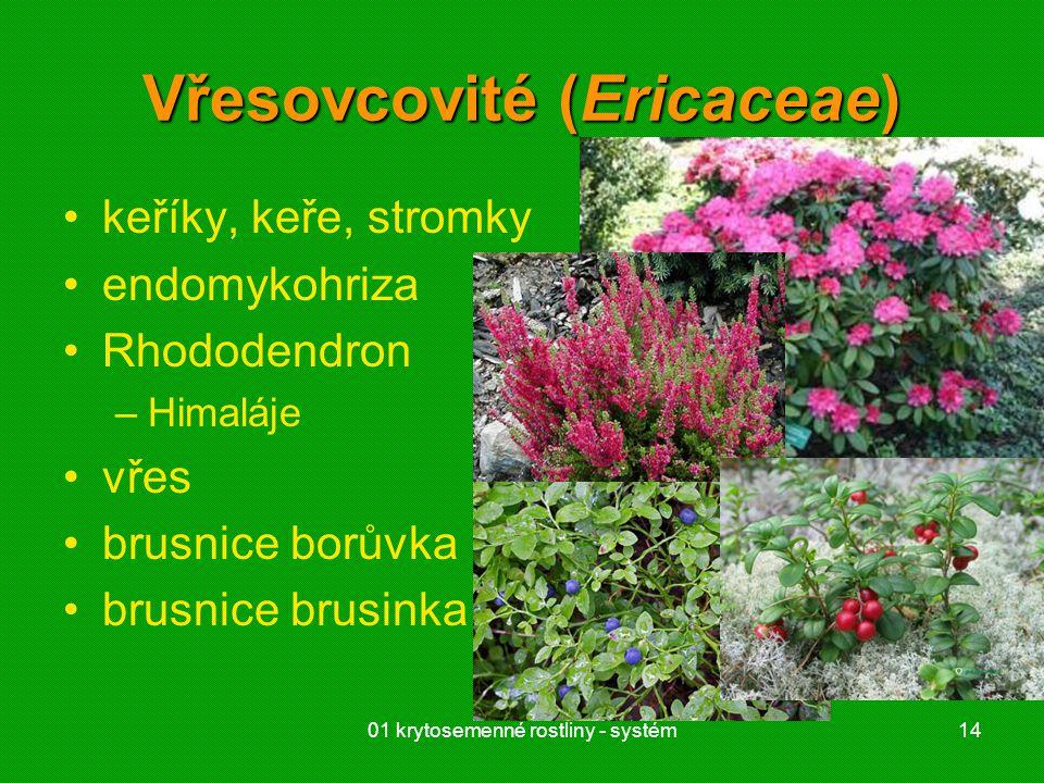 01 krytosemenné rostliny - systém14 Vřesovcovité (Ericaceae) keříky, keře, stromky endomykohriza Rhododendron –Himaláje vřes brusnice borůvka brusnice