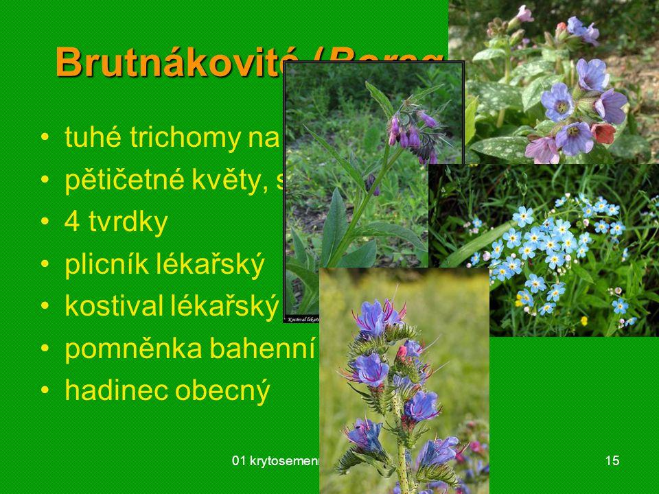 01 krytosemenné rostliny - systém15 Brutnákovité (Boraginaceae) tuhé trichomy na listech i stonku pětičetné květy, srůsty 4 tvrdky plicník lékařský ko