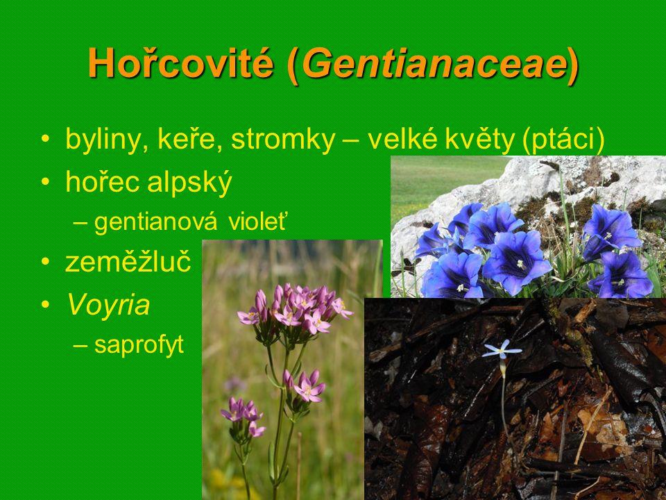 01 krytosemenné rostliny - systém17 Hořcovité (Gentianaceae) byliny, keře, stromky – velké květy (ptáci) hořec alpský –gentianová violeť zeměžluč Voyr