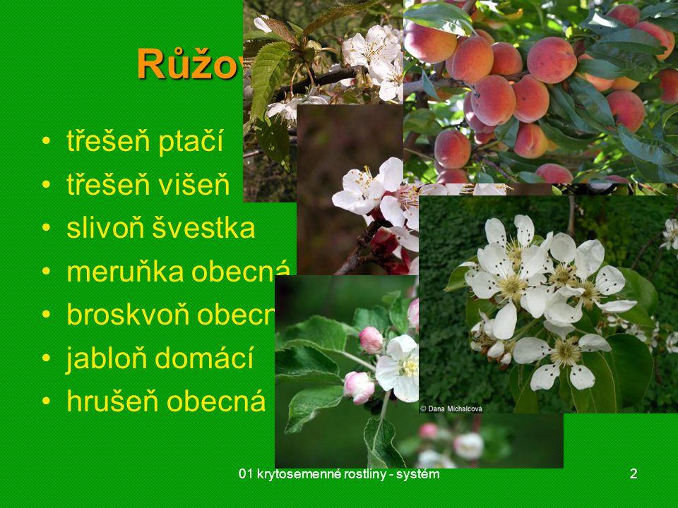 01 krytosemenné rostliny - systém2 Růžovité (Rosaceae) třešeň ptačí třešeň višeň slivoň švestka meruňka obecná broskvoň obecná, nektarinka jabloň domá