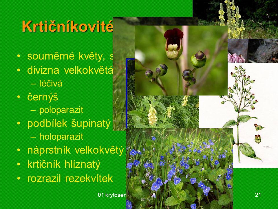 01 krytosemenné rostliny - systém21 Krtičníkovité (Scrophulariaceae) souměrné květy, srůst kalichu a koruny divizna velkokvětá –léčivá černýš –polopar