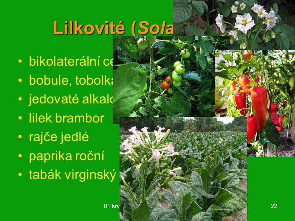 01 krytosemenné rostliny - systém22 Lilkovité (Solanaceae) bikolaterální cévní svazky bobule, tobolka jedovaté alkaloidy lilek brambor rajče jedlé pap