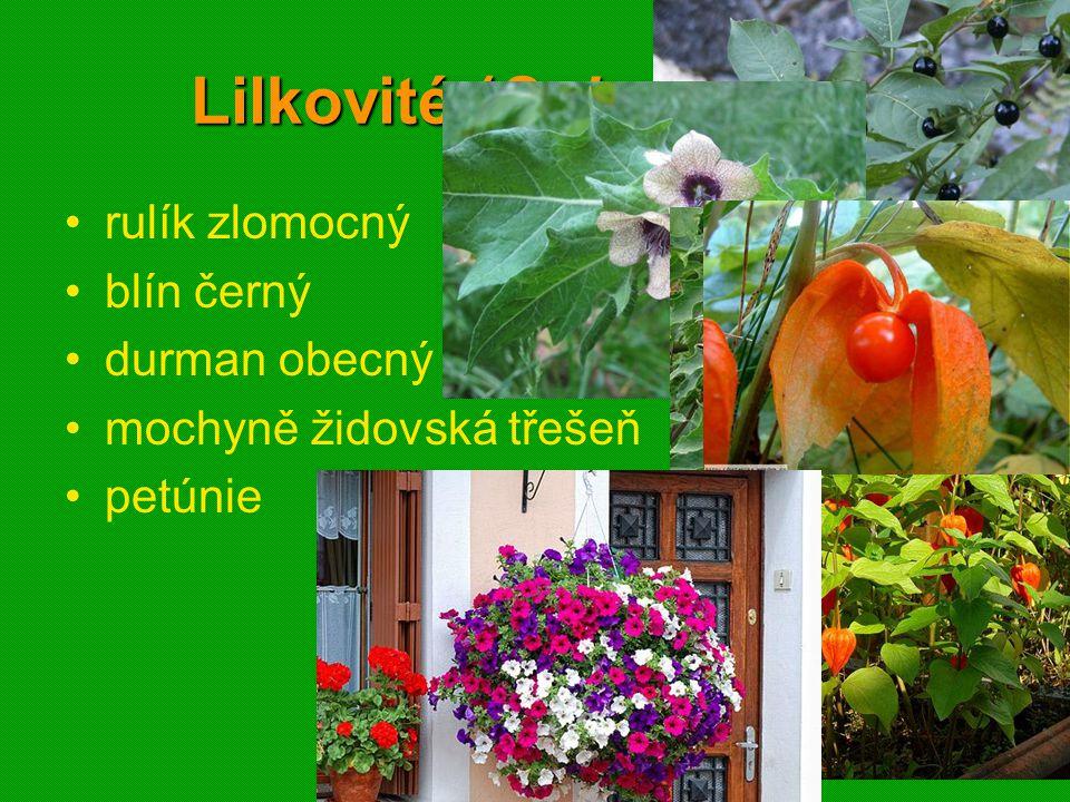 01 krytosemenné rostliny - systém23 Lilkovité (Solanaceae) rulík zlomocný blín černý durman obecný mochyně židovská třešeň petúnie