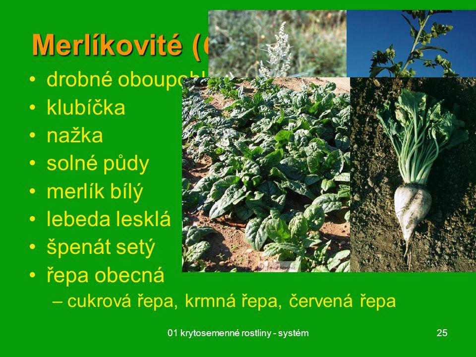 01 krytosemenné rostliny - systém25 Merlíkovité (Chenopodiaceae) drobné oboupohlavné i jednopohl. květy klubíčka nažka solné půdy merlík bílý lebeda l