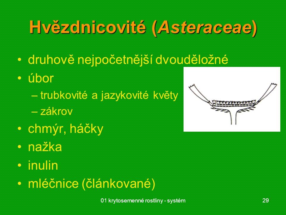01 krytosemenné rostliny - systém29 Hvězdnicovité (Asteraceae) druhově nejpočetnější dvouděložné úbor –trubkovité a jazykovité květy –zákrov chmýr, há