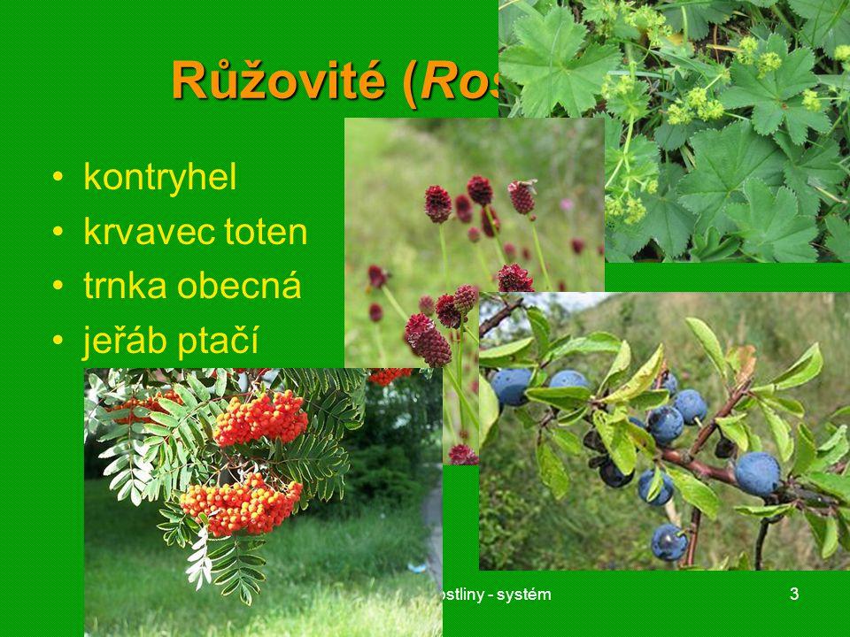 01 krytosemenné rostliny - systém3 Růžovité (Rosaceae) kontryhel krvavec toten trnka obecná jeřáb ptačí