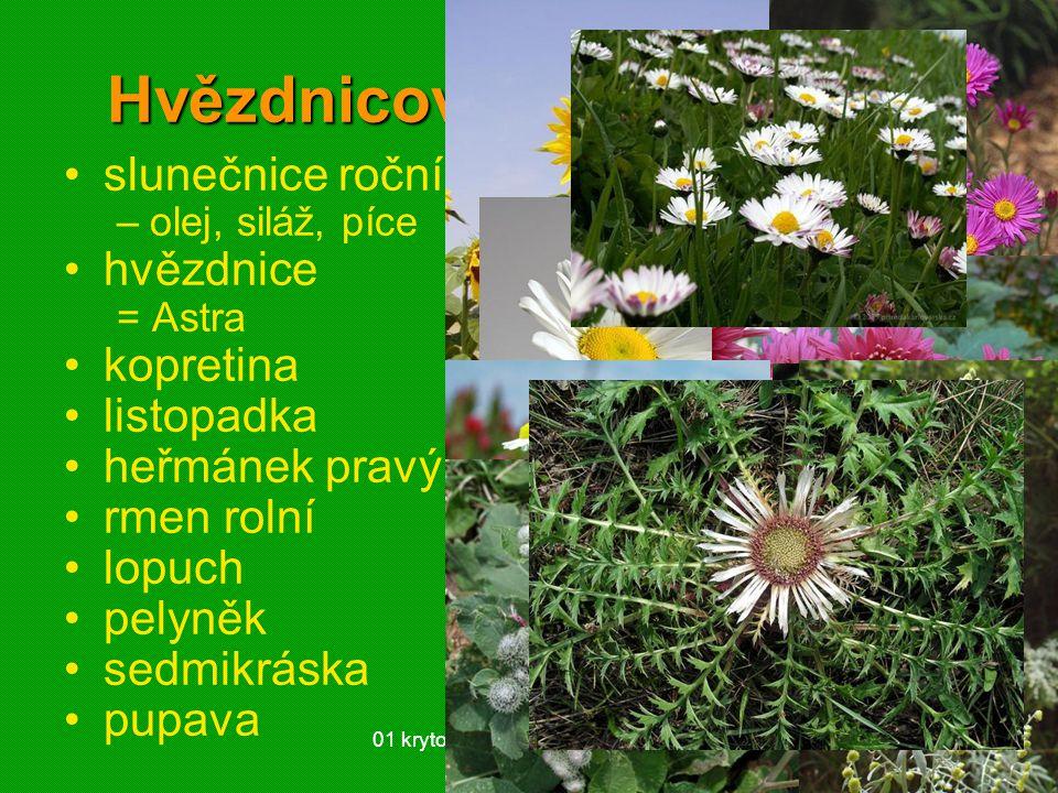 01 krytosemenné rostliny - systém30 Hvězdnicovité (Asteraceae) slunečnice roční –olej, siláž, píce hvězdnice = Astra kopretina listopadka heřmánek pra