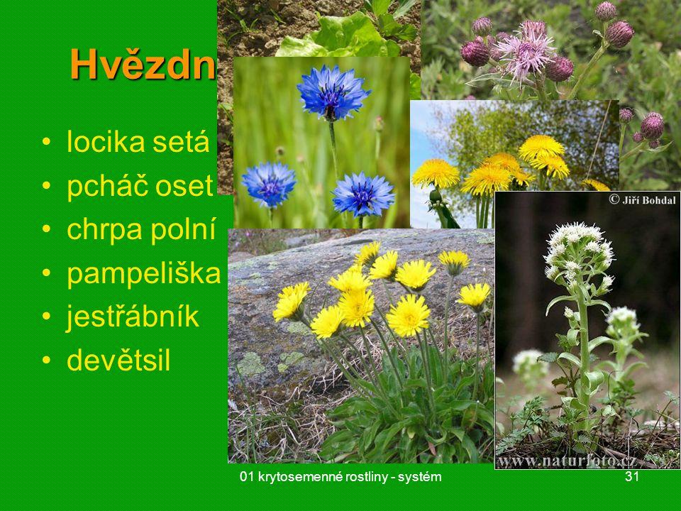 01 krytosemenné rostliny - systém31 Hvězdnicovité (Asteraceae) locika setá pcháč oset chrpa polní pampeliška jestřábník devětsil
