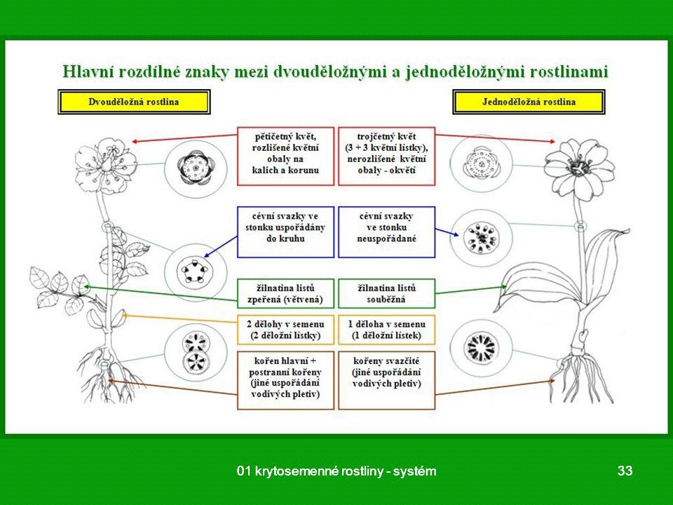01 krytosemenné rostliny - systém3301 krytosemenné rostliny - systém33