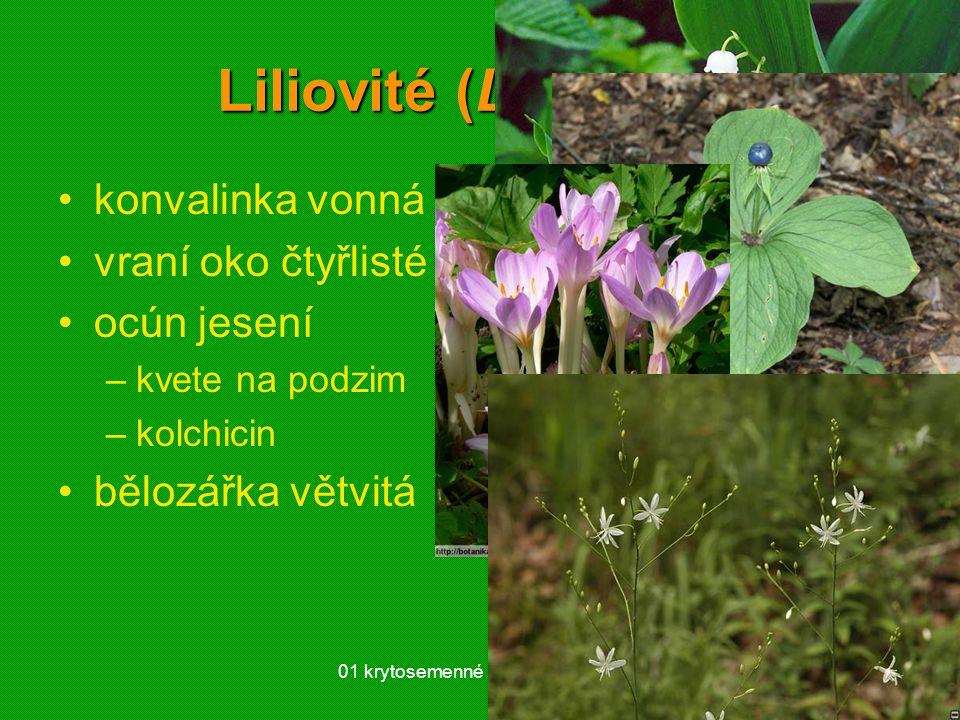 01 krytosemenné rostliny - systém35 Liliovité (Liliaceae) konvalinka vonná vraní oko čtyřlisté ocún jesení –kvete na podzim –kolchicin bělozářka větvi
