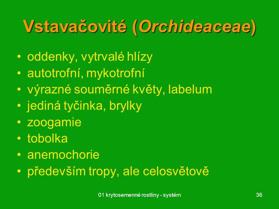 01 krytosemenné rostliny - systém36 Vstavačovité (Orchideaceae) oddenky, vytrvalé hlízy autotrofní, mykotrofní výrazné souměrné květy, labelum jediná