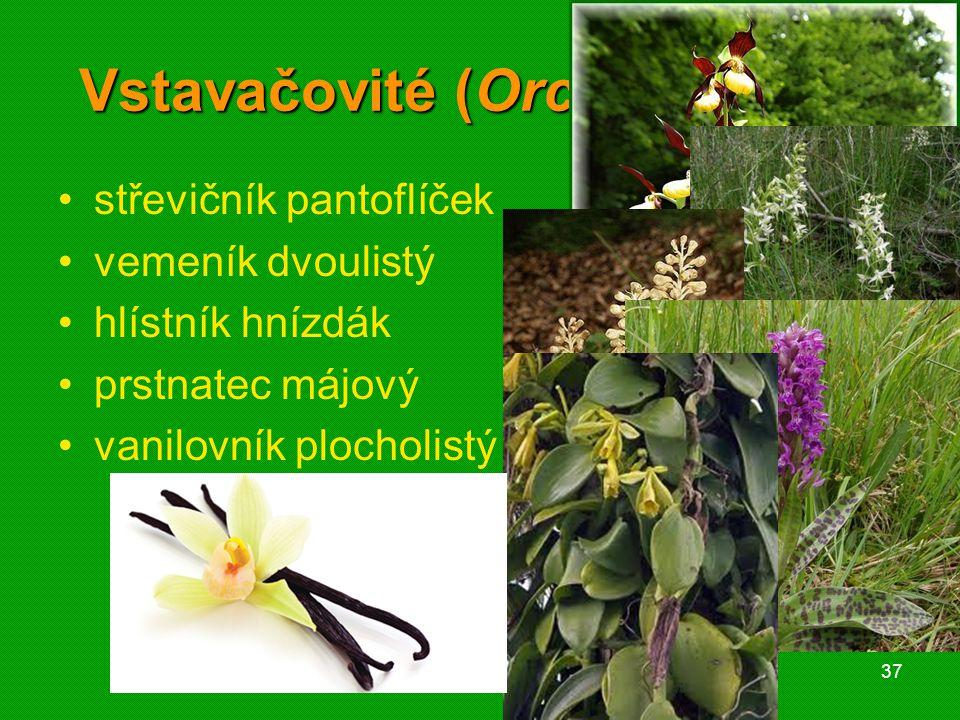 01 krytosemenné rostliny - systém37 Vstavačovité (Orchideaceae) střevičník pantoflíček vemeník dvoulistý hlístník hnízdák prstnatec májový vanilovník