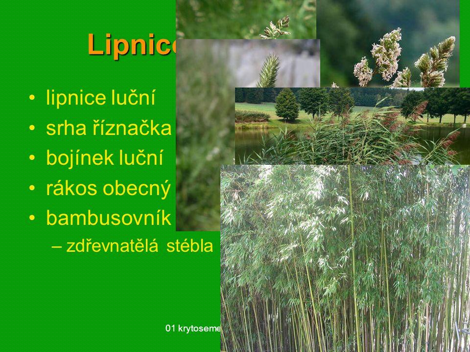 01 krytosemenné rostliny - systém41 Lipnicovité (Poaceae) lipnice luční srha říznačka bojínek luční rákos obecný bambusovník –zdřevnatělá stébla