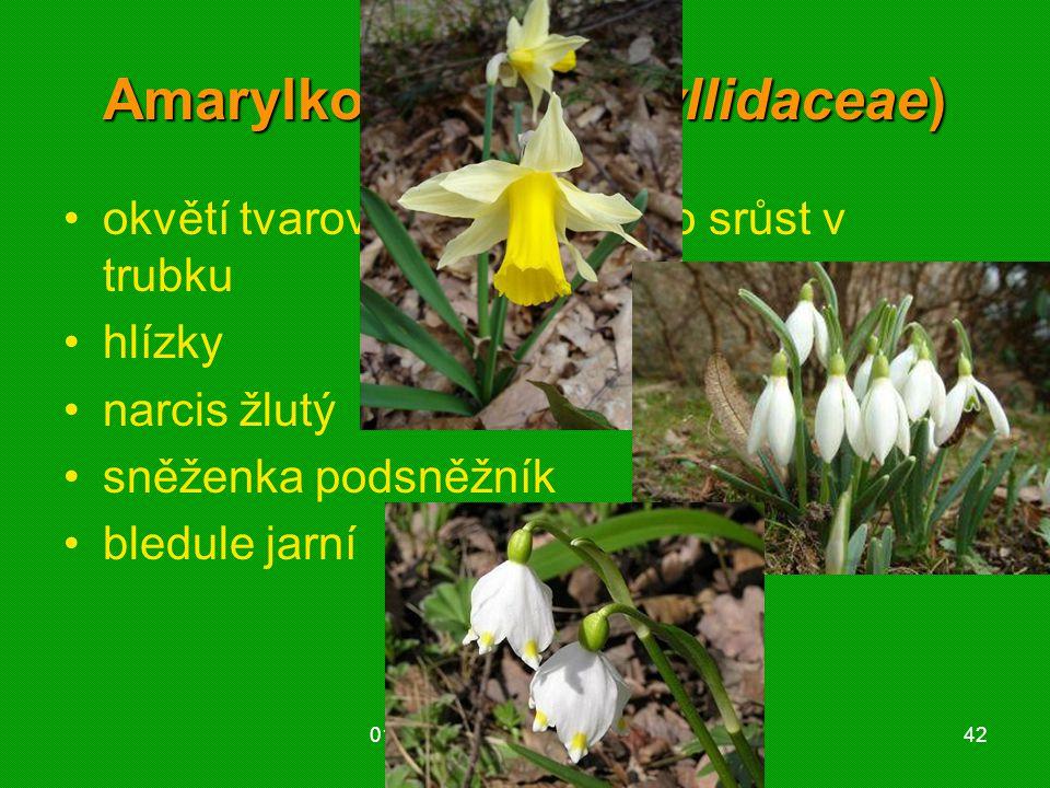 01 krytosemenné rostliny - systém42 Amarylkovité (Amaryllidaceae) okvětí tvarově odlišené nebo srůst v trubku hlízky narcis žlutý sněženka podsněžník