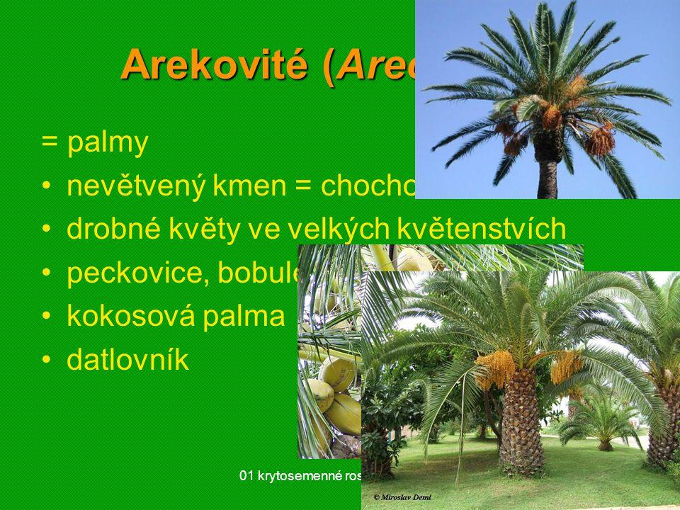 01 krytosemenné rostliny - systém43 Arekovité (Arecaceae) = palmy nevětvený kmen = chochol listů drobné květy ve velkých květenstvích peckovice, bobul