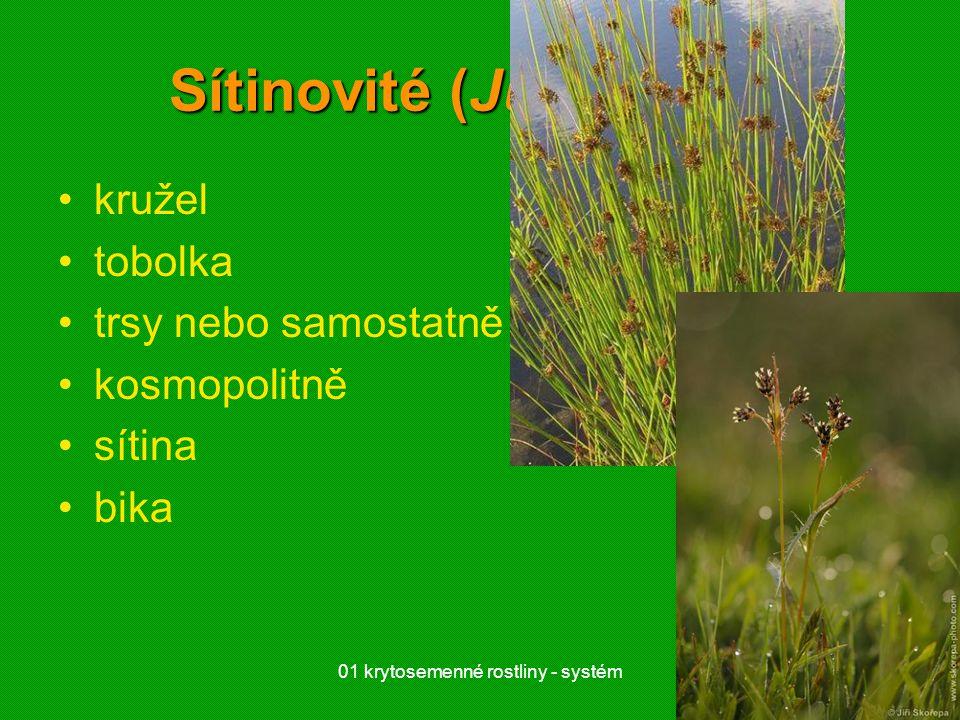 01 krytosemenné rostliny - systém44 Sítinovité (Juncaceae) kružel tobolka trsy nebo samostatně kosmopolitně sítina bika