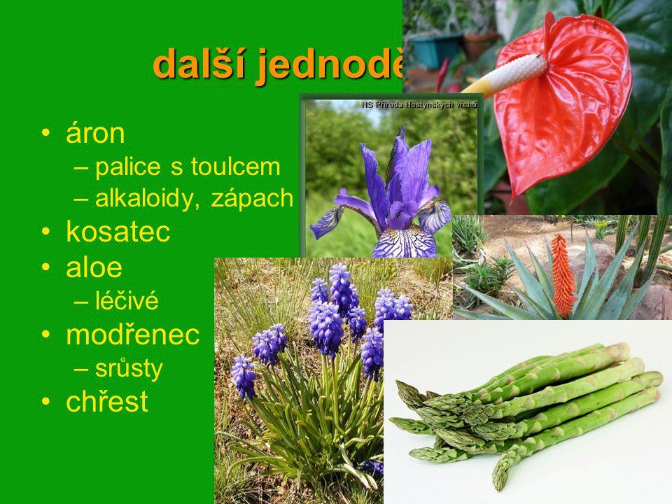 01 krytosemenné rostliny - systém45 další jednoděložné áron –palice s toulcem –alkaloidy, zápach kosatec aloe –léčivé modřenec –srůsty chřest