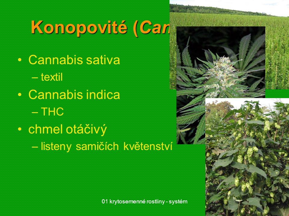 01 krytosemenné rostliny - systém5 Konopovité (Cannabaceae) Cannabis sativa –textil Cannabis indica –THC chmel otáčivý –listeny samičích květenství