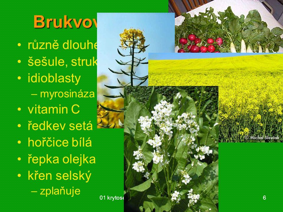 01 krytosemenné rostliny - systém6 Brukvovité (Brassicaceae) různě dlouhé nitky tyčinek šešule, struk idioblasty –myrosináza → hořčičné silice vitamin