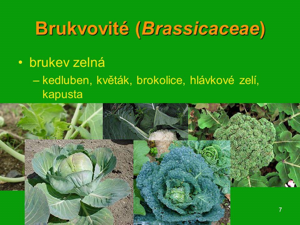 01 krytosemenné rostliny - systém8 Brukvovité (Brassicaceae) česnáček lékařský kyčelnice cibulkonosná penízek rolní kokoška pastuší tobolka houseníček rolní