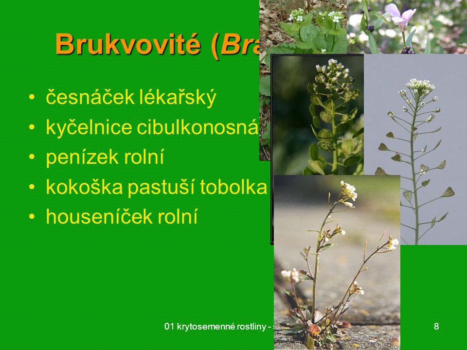 01 krytosemenné rostliny - systém29 Hvězdnicovité (Asteraceae) druhově nejpočetnější dvouděložné úbor –trubkovité a jazykovité květy –zákrov chmýr, háčky nažka inulin mléčnice (článkované)