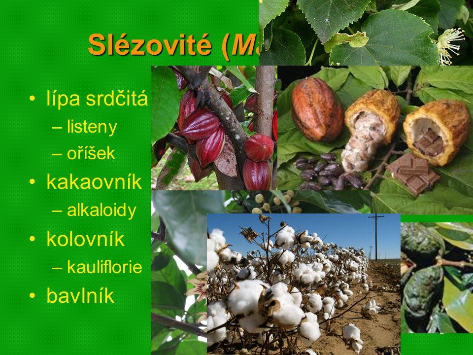 01 krytosemenné rostliny - systém40 Lipnicovité (Poaceae) pšenice setá žito seté ječmen setý oves setý rýže setá kukuřice setá cukrovník lékařský