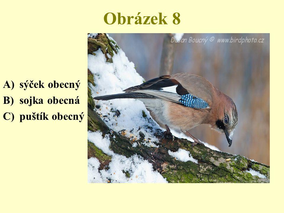 Obrázek 8 A)sýček obecný B)sojka obecná C)puštík obecný