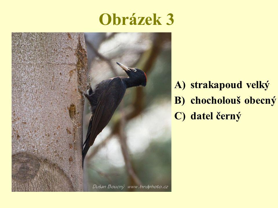 Obrázek 3 A)strakapoud velký B)chocholouš obecný C)datel černý