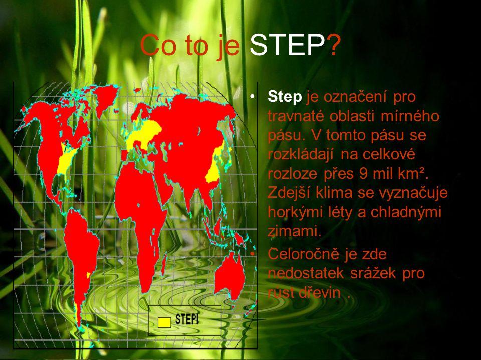 Co to je STEP? Step je označení pro travnaté oblasti mírného pásu. V tomto pásu se rozkládají na celkové rozloze přes 9 mil km². Zdejší klima se vyzna