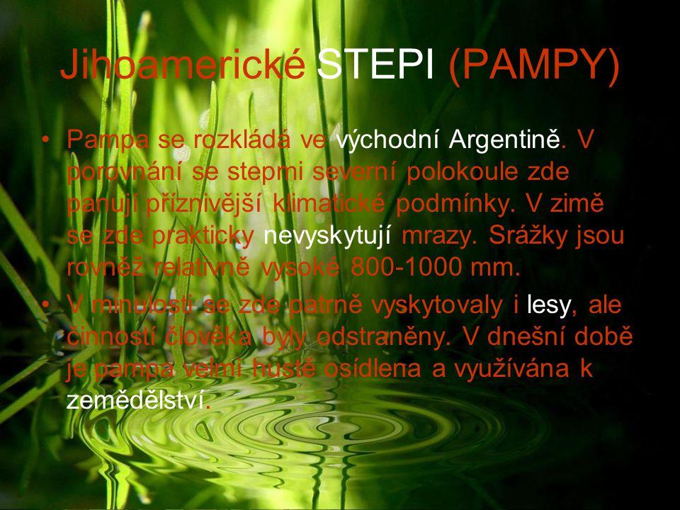 Jihoamerické STEPI (PAMPY) Pampa se rozkládá ve východní Argentině. V porovnání se stepmi severní polokoule zde panují příznivější klimatické podmínky