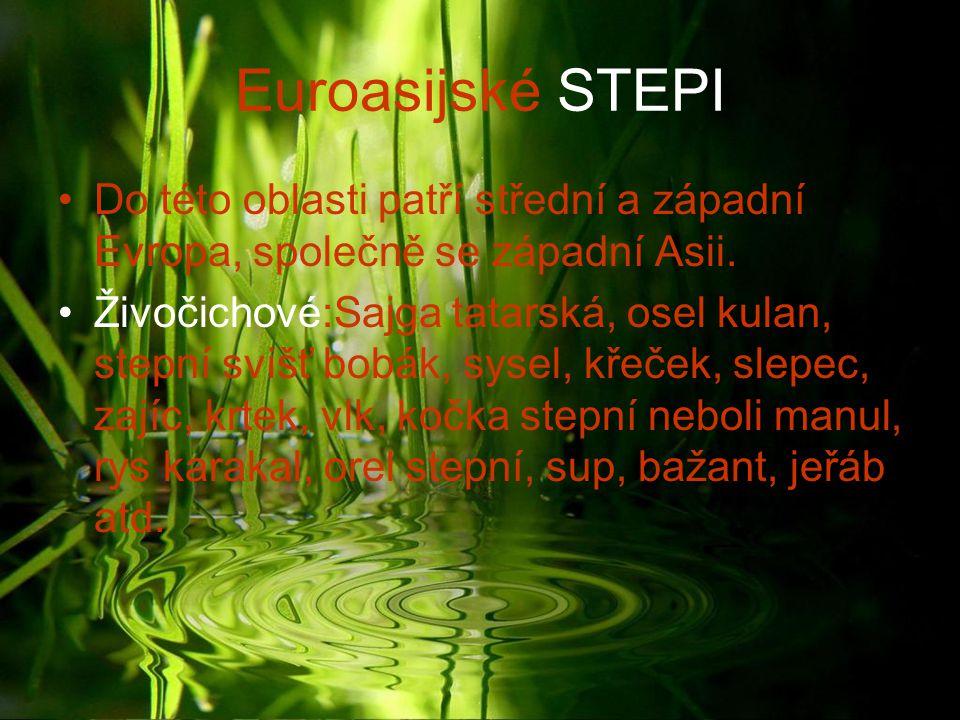 Euroasijské STEPI Do této oblasti patří střední a západní Evropa, společně se západní Asii. Živočichové:Sajga tatarská, osel kulan, stepní svišť bobák
