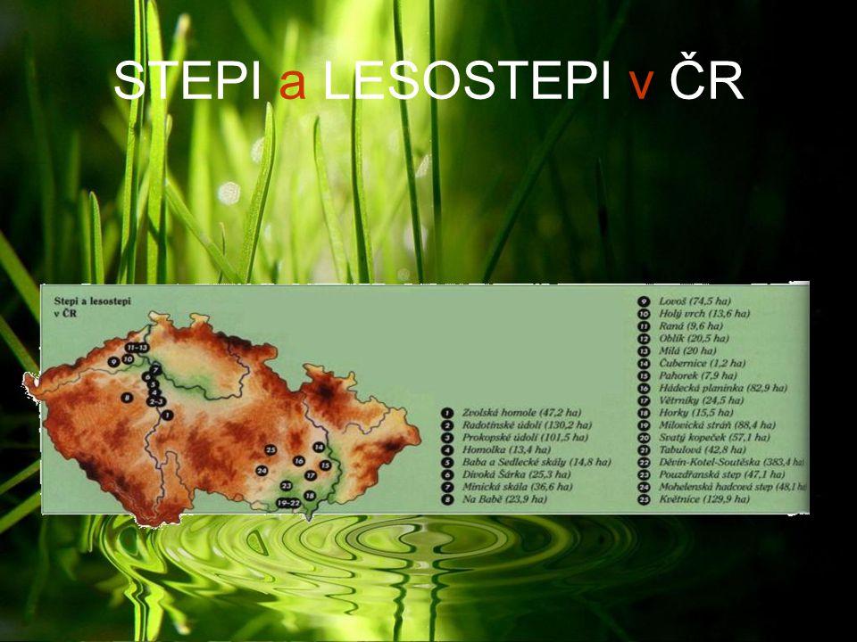 STEPI a LESOSTEPI v ČR