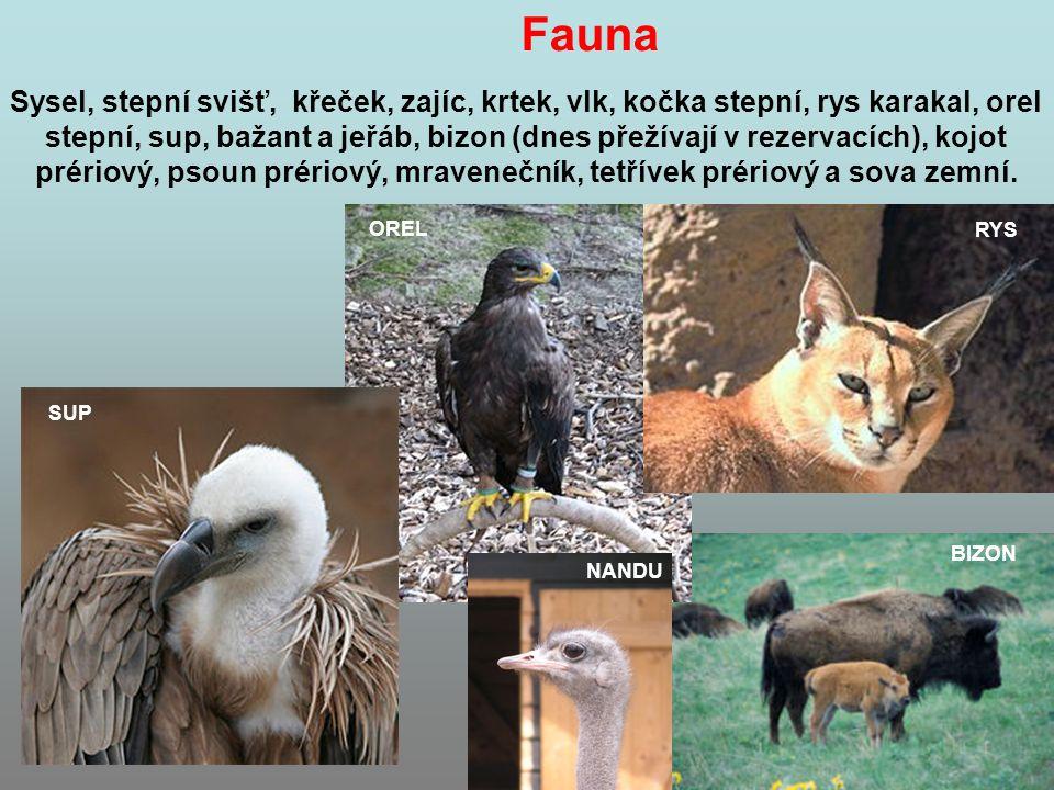 Sysel, stepní svišť, křeček, zajíc, krtek, vlk, kočka stepní, rys karakal, orel stepní, sup, bažant a jeřáb, bizon (dnes přežívají v rezervacích), koj