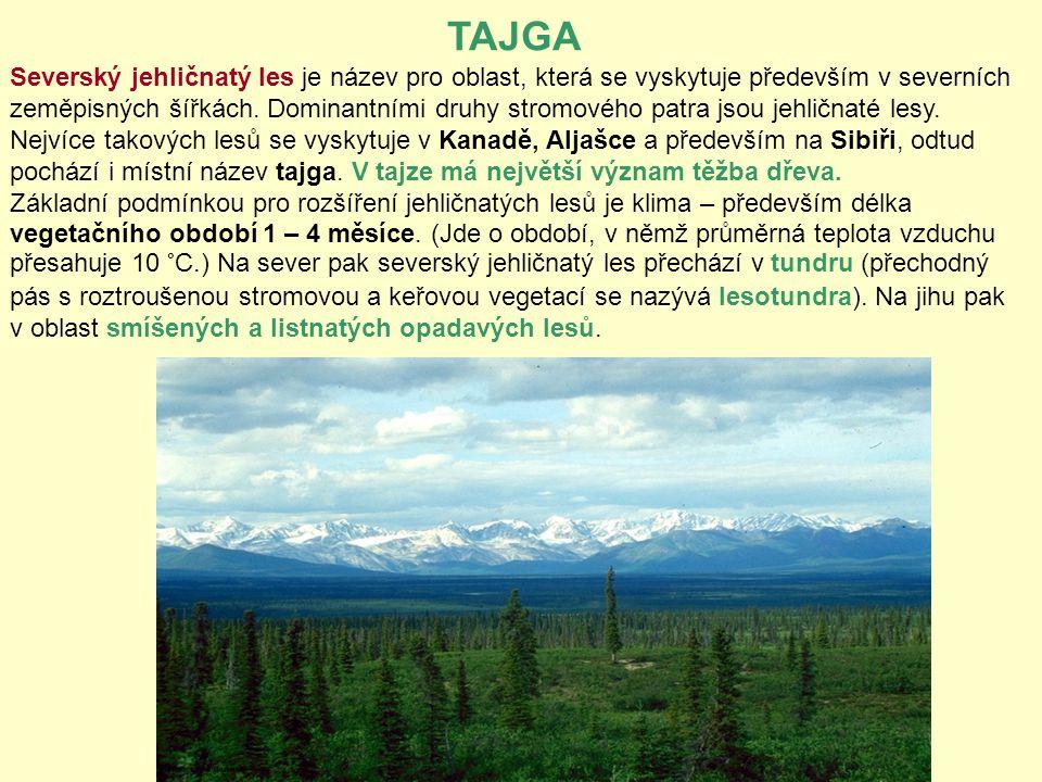 TAJGA Severský jehličnatý les je název pro oblast, která se vyskytuje především v severních zeměpisných šířkách. Dominantními druhy stromového patra j