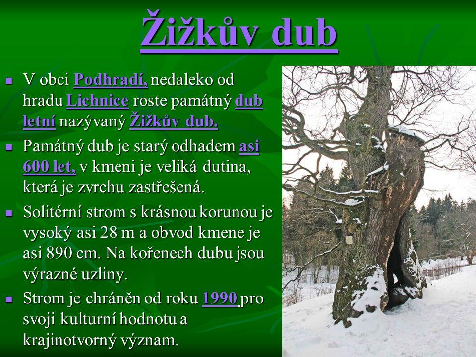 Žižkův dub V obci Podhradí, nedaleko od hradu Lichnice roste památný dub letní nazývaný Žižkův dub. V obci Podhradí, nedaleko od hradu Lichnice roste