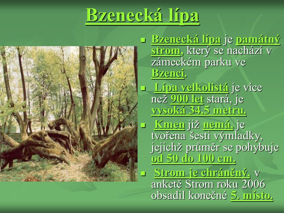 Bzenecká lípa Bzenecká lípa je památný strom, který se nachází v zámeckém parku ve Bzenci. Bzenecká lípa je památný strom, který se nachází v zámeckém