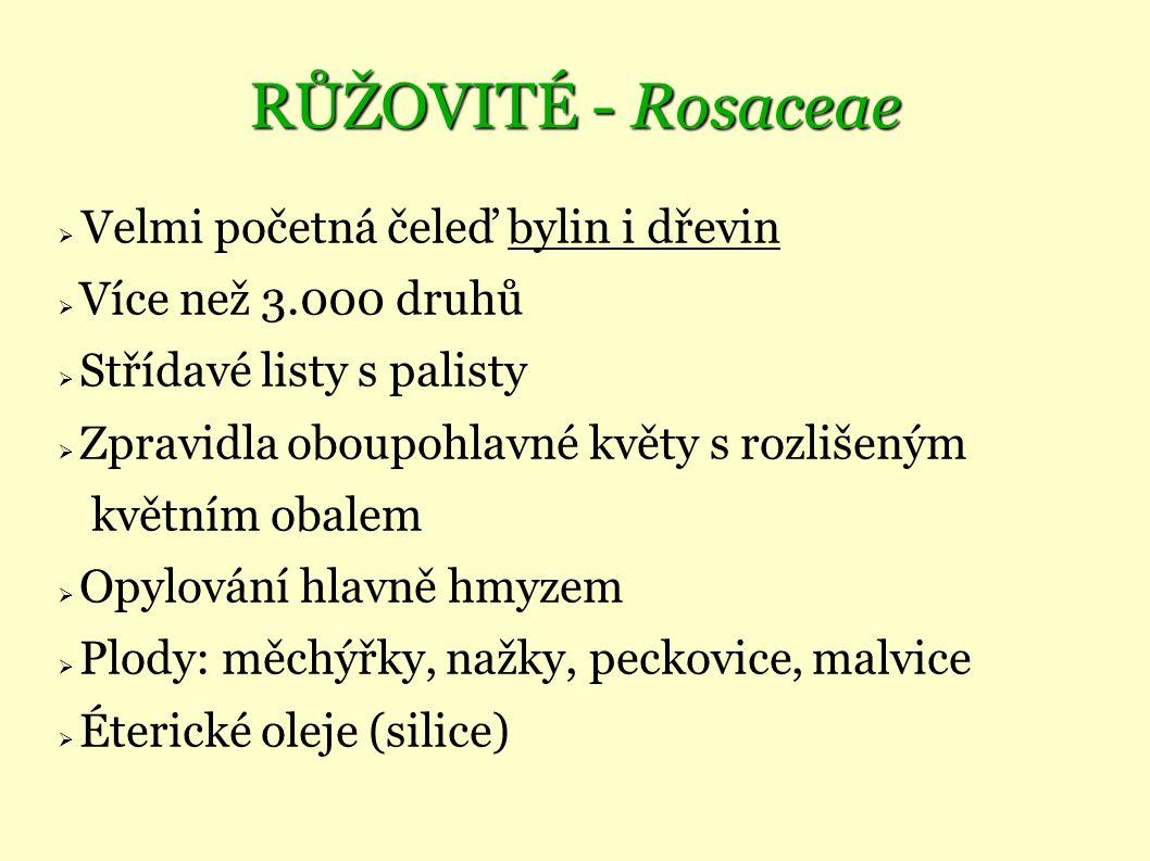 RŮŽOVITÉ - Rosaceae  Velmi početná čeleď bylin i dřevin  Více než 3.000 druhů  Střídavé listy s palisty  Zpravidla oboupohlavné květy s rozlišeným