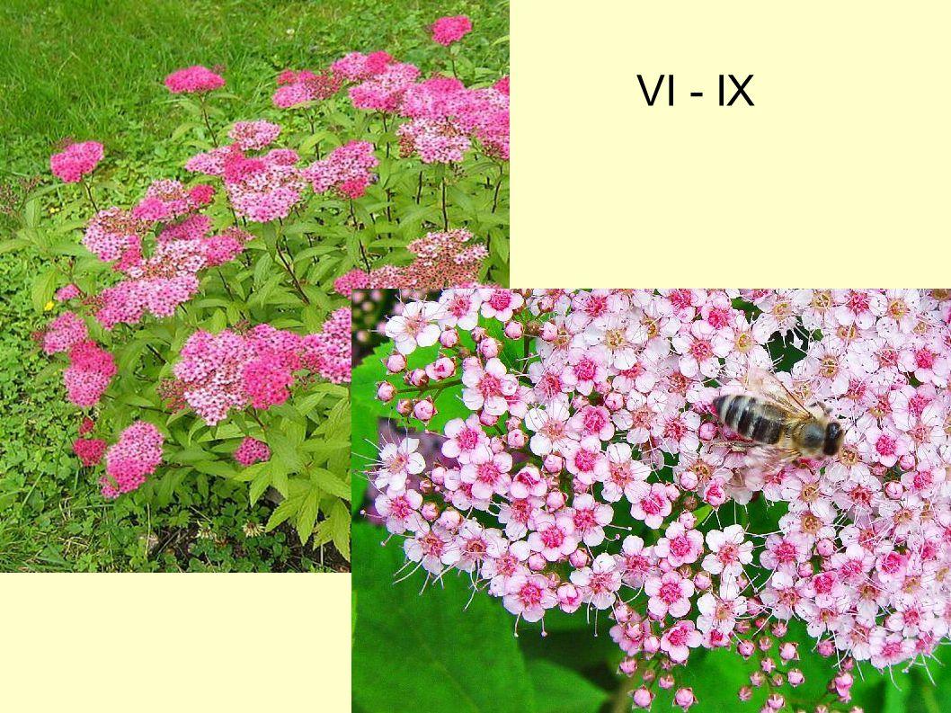 VI - IX