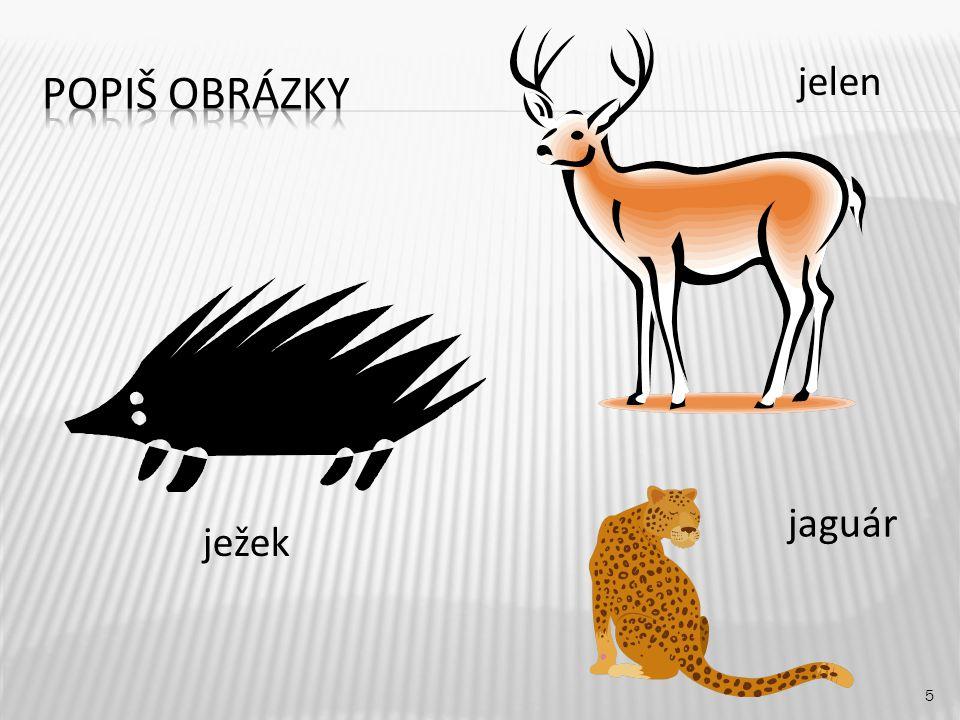 5 ježek jelen jaguár