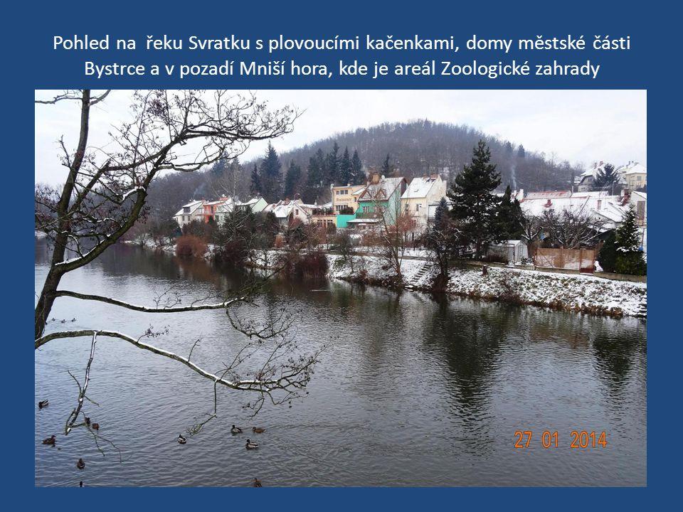 Pohled na řeku Svratku s plovoucími kačenkami, domy městské části Bystrce a v pozadí Mniší hora, kde je areál Zoologické zahrady