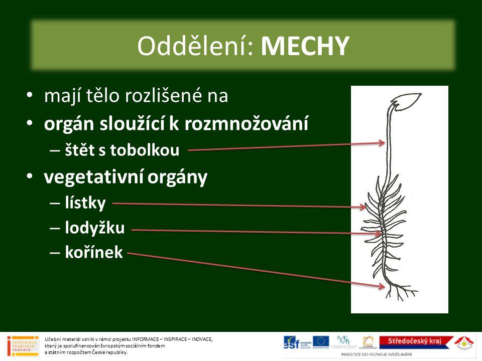 oddělení: MECHY mají tělo rozlišené na orgán sloužící k rozmnožování – štět s tobolkou vegetativní orgány – lístky – lodyžku – kořínek Oddělení: MECHY