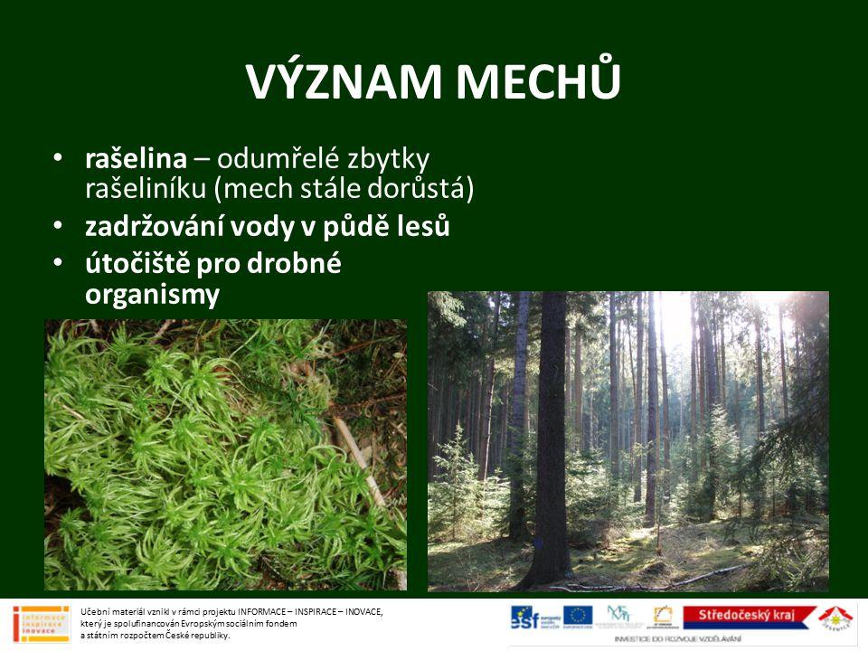 VÝZNAM MECHŮ rašelina – odumřelé zbytky rašeliníku (mech stále dorůstá) zadržování vody v půdě lesů útočiště pro drobné organismy Učební materiál vzni