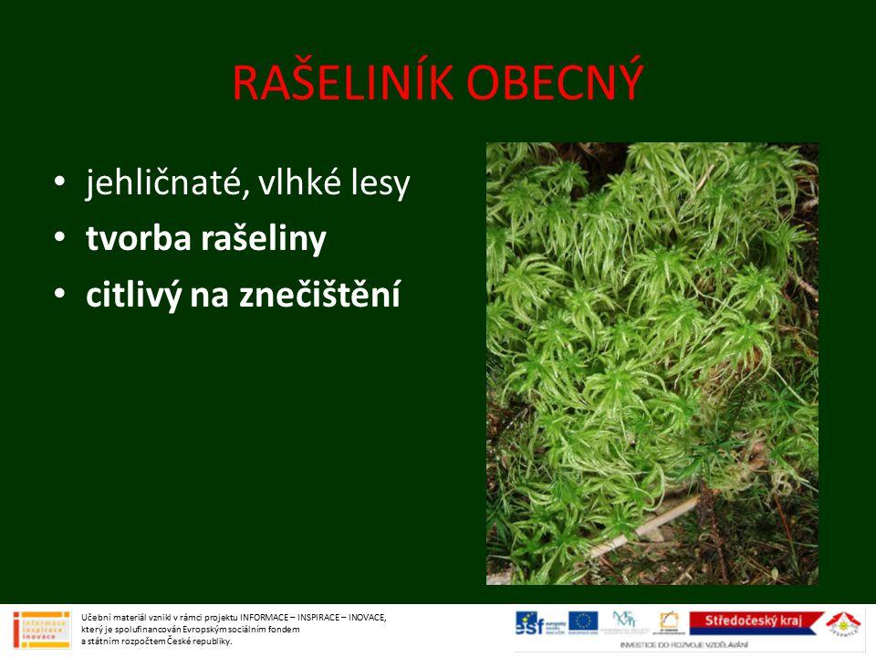 RAŠELINÍK OBECNÝ jehličnaté, vlhké lesy tvorba rašeliny citlivý na znečištění Učební materiál vznikl v rámci projektu INFORMACE – INSPIRACE – INOVACE,