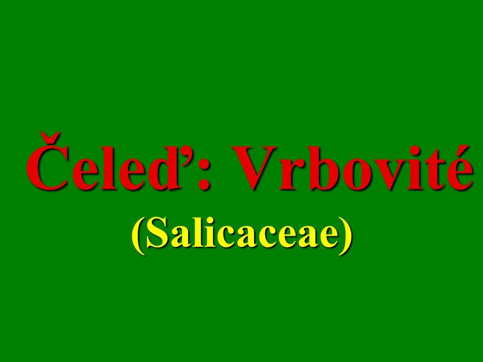 Čeleď: Vrbovité (Salicaceae) Čeleď: Vrbovité (Salicaceae)