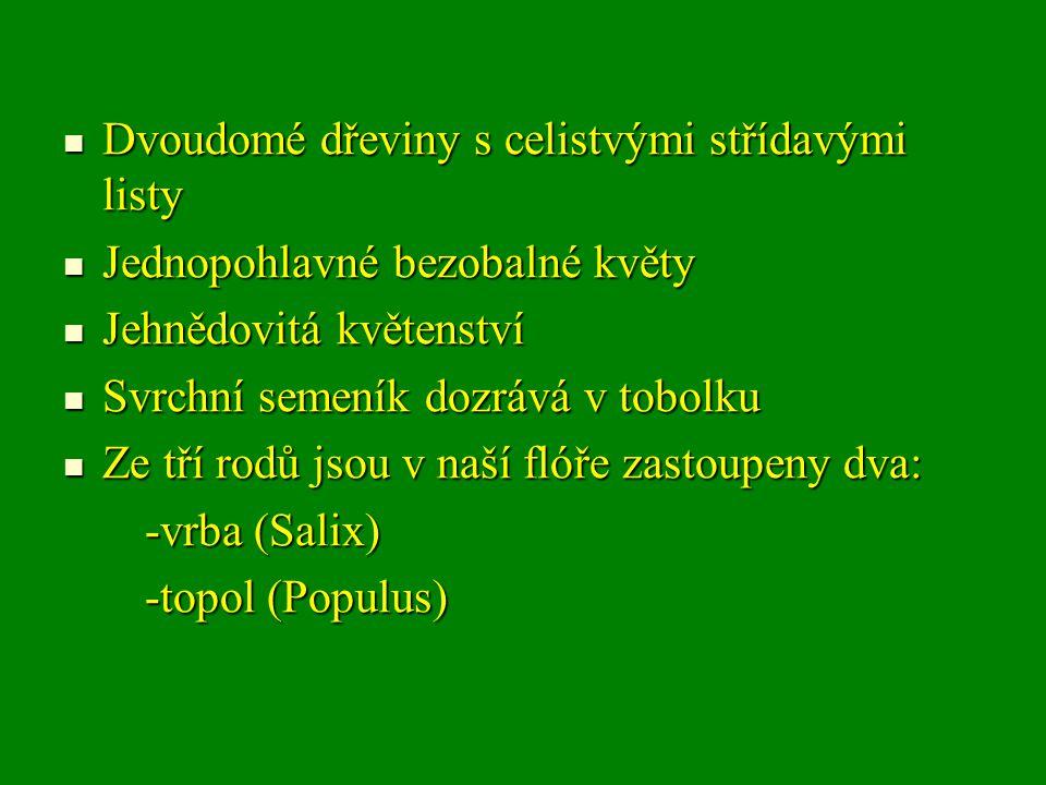 Dvoudomé dřeviny s celistvými střídavými listy Dvoudomé dřeviny s celistvými střídavými listy Jednopohlavné bezobalné květy Jednopohlavné bezobalné květy Jehnědovitá květenství Jehnědovitá květenství Svrchní semeník dozrává v tobolku Svrchní semeník dozrává v tobolku Ze tří rodů jsou v naší flóře zastoupeny dva: Ze tří rodů jsou v naší flóře zastoupeny dva: -vrba (Salix) -vrba (Salix) -topol (Populus) -topol (Populus)